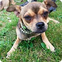 Adopt A Pet :: SPICE - Cadiz, OH