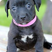 Adopt A Pet :: Bionca - Waldorf, MD