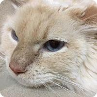 Adopt A Pet :: Casper - Fort Collins, CO