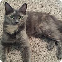 Adopt A Pet :: Ezmerelda - Cedar Springs, MI