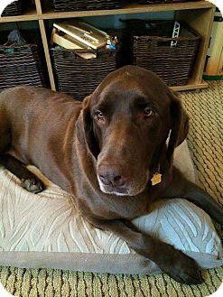Labrador Retriever Mix Dog for adoption in Kettering, Ohio - Dallas