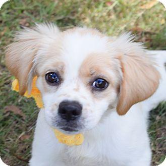 Small Dog Rescue Denver Colorado