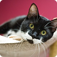Adopt A Pet :: Jacks - Grayslake, IL