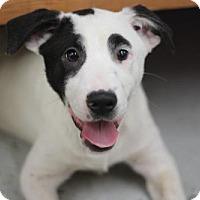 Adopt A Pet :: MARTA - Phoenix, AZ