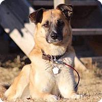 Adopt A Pet :: MOLLY - Winnipeg, MB