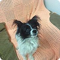 Adopt A Pet :: Pappi - Tumwater, WA