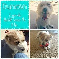 Adopt A Pet :: Duncan - San Antonio, TX