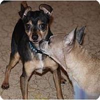 Adopt A Pet :: JR - Toronto/Etobicoke/GTA, ON