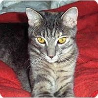 Adopt A Pet :: Charissa - Irvine, CA