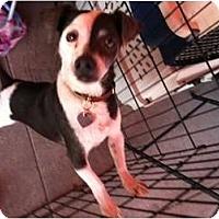 Adopt A Pet :: Bacari - North Hollywood, CA