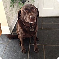 Adopt A Pet :: Coco - Oak Brook, IL