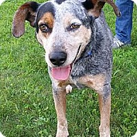 Adopt A Pet :: B.G. - PENDING, in Maine - kennebunkport, ME