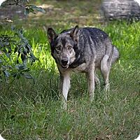 Adopt A Pet :: Nokie - Orlando, FL