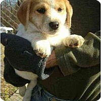 Adopt A Pet :: Yoshi - Lincolndale, NY