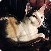 Adopt A Pet :: Lacey - TRIAL ADOPTION - East Brunswick, NJ