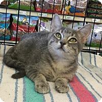 Adopt A Pet :: Mikki - Gilbert, AZ