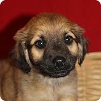 Adopt A Pet :: Wilson - Waldorf, MD