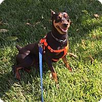 Adopt A Pet :: Sebastian - Sacramento, CA