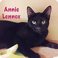 Adopt A Pet :: Annie Lennox - Foothill Ranch, CA