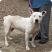 Adopt A Pet :: Bonz - Cochran, GA