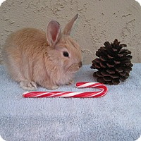 Adopt A Pet :: Cookie - Bonita, CA
