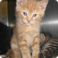 Adopt A Pet :: 17934 - Hobart, IN