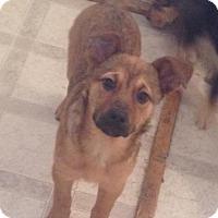 Adopt A Pet :: Smarties - Saskatoon, SK