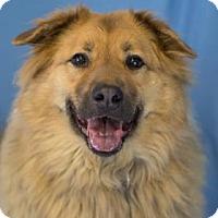 Adopt A Pet :: Angus - Bradenton, FL