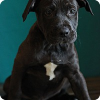 Adopt A Pet :: Leonard - Waldorf, MD