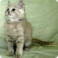 Adopt A Pet :: Aslan - Powell, OH