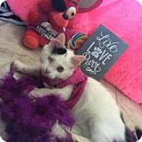 Adopt A Pet :: Rapunzel - East Brunswick, NJ