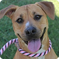 Adopt A Pet :: LUCY:Low fees/spayed - Red Bluff, CA