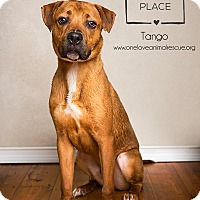 Adopt A Pet :: Tango - Mount Laurel, NJ