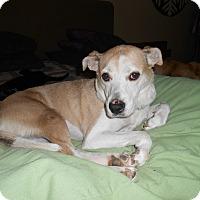 Adopt A Pet :: Honey - North Jackson, OH