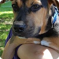 Adopt A Pet :: TBone-Adopted! - Detroit, MI