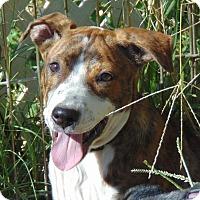 Adopt A Pet :: Misfit - Seattle, WA