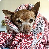 Adopt A Pet :: Gimlet - Los Angeles, CA