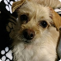 Terrier (Unknown Type, Small) Mix Dog for adoption in Tijeras, New Mexico - Honey