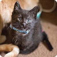 Adopt A Pet :: Franklin - Morgantown, WV