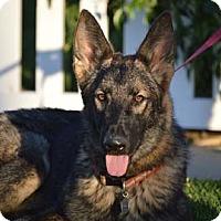 Adopt A Pet :: Aries - Downey, CA