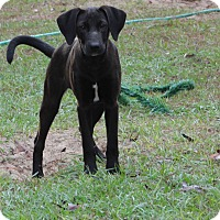 Adopt A Pet :: Lady Lincoln - Weeki Wachee, FL