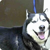 Adopt A Pet :: URGENT 01/20 BIG BEAR - San Bernardino, CA