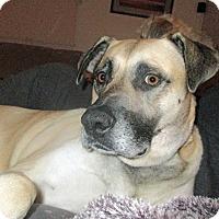 Adopt A Pet :: Maverick - Baltimore, MD