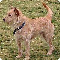 Adopt A Pet :: *URGENT* Roger - Van Nuys, CA