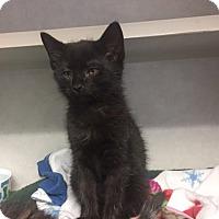 Adopt A Pet :: Emmett - Cashiers, NC