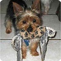 Adopt A Pet :: Bucky - Conroe, TX
