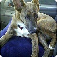 Adopt A Pet :: CHLOE - Malibu, CA