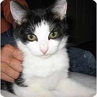 Adopt A Pet :: Dixie - Wakinsville, GA