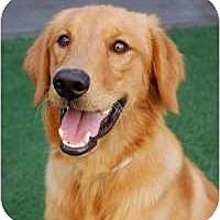 Adopt A Pet :: Bingo - Scottsdale, AZ