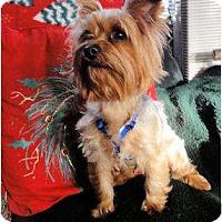 Adopt A Pet :: Tuff - Mooy, AL